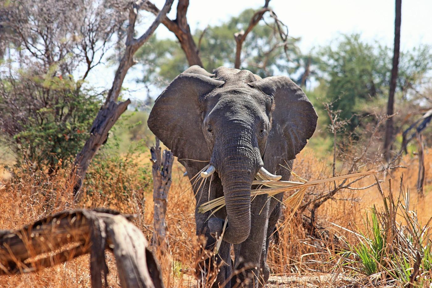 sydafrika wildlife volunteer