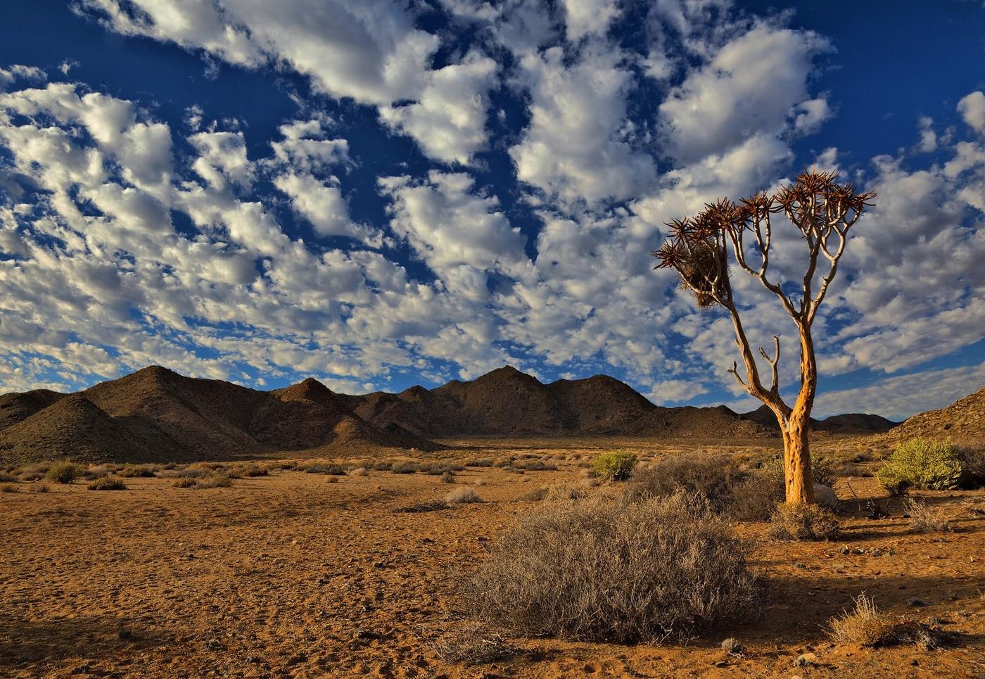 sydafrika savann
