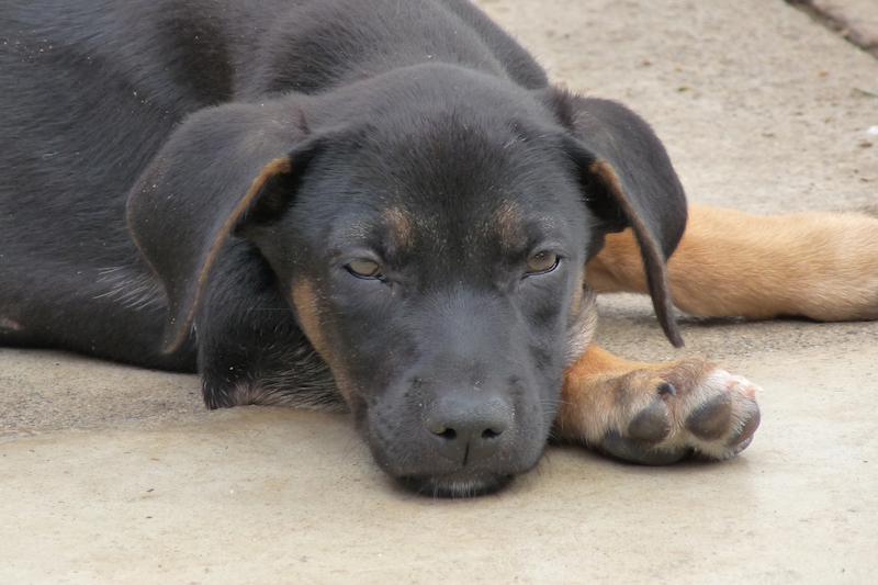 domestic-animal-rescue-4