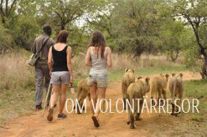 om-volontarsresor