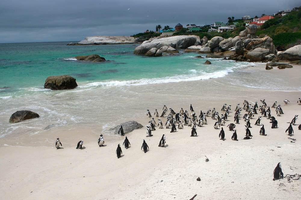 penguins-sa