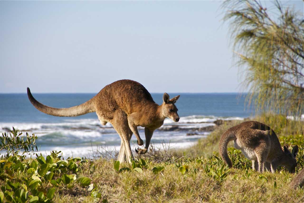 plugga engelska byron bay australien