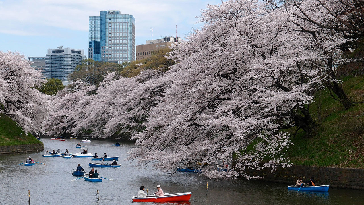 plugga japanska språkkurs japanska i japan tokyo