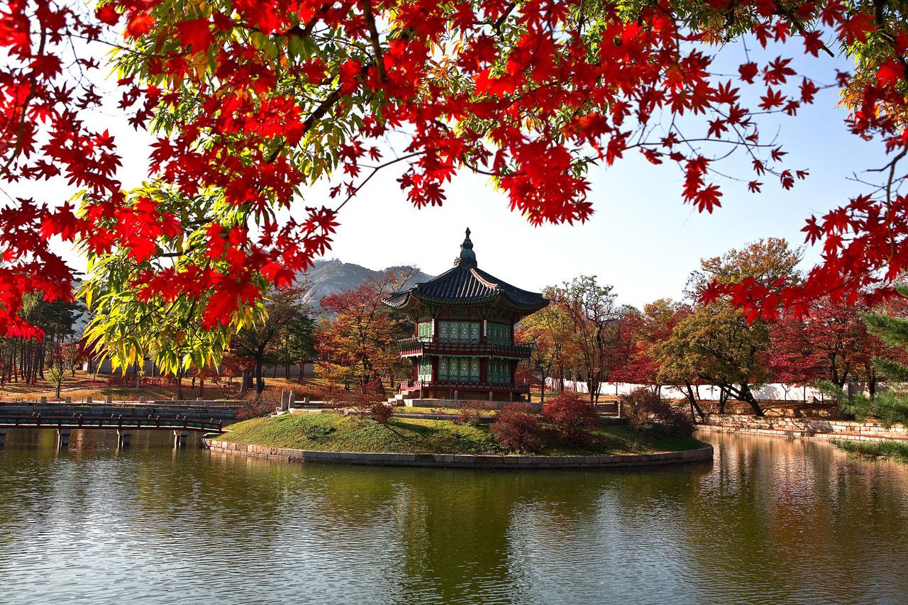 studera i sydkorea