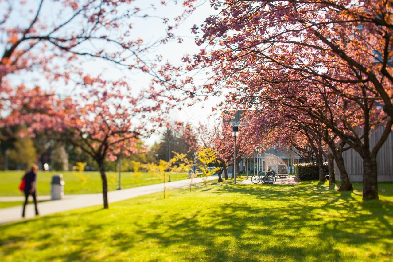 studera kanada langara college